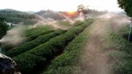 Watering Tea Plantations