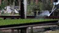 Watering the little seedling