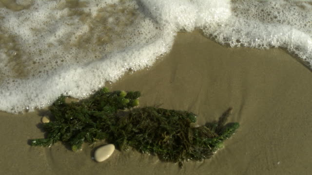 SLO MO wave laps over seaweed, Spain