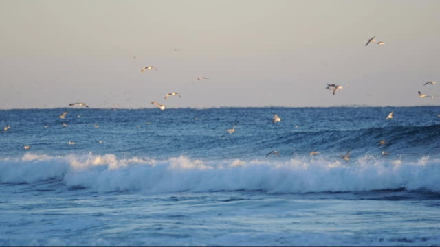 waves and seagulls