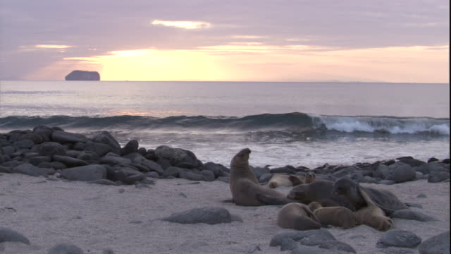 Waves break onto a beach with resting Galapagos sea lions. Available in HD.