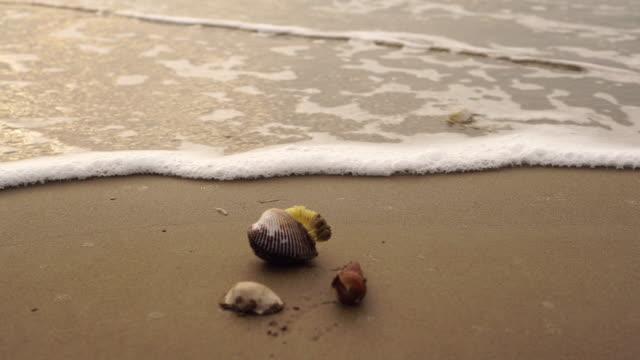 Waves roll over seashells on the beach