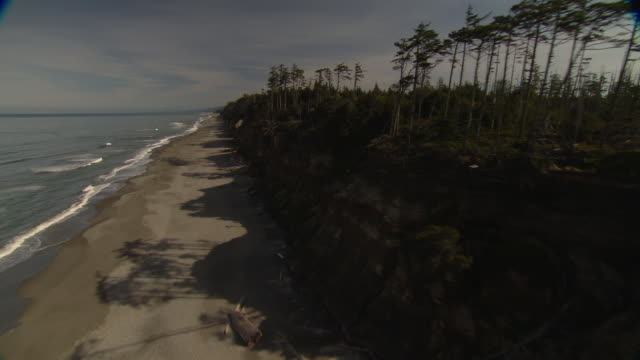 Waves wash onto a wooded beach on Washington's Olympic Peninsula.