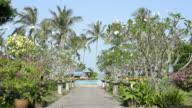 Way to the swimming pool with frangipani trees