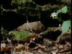 Weasel investigates log