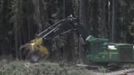 West Fraser logging operations in the wilderness near a town called Blue Ridge Alberta Canada on June 4th 2015 Shots A large machine called a feller...