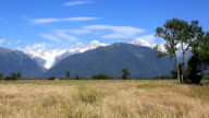 Westland National Park Landscape and Fox Glacier, New Zealand