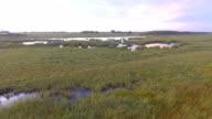 Wetland Marsh on the prairies in late summer