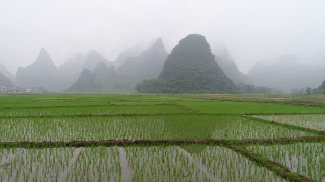 Wetland park,Guilin,Guangxi,China