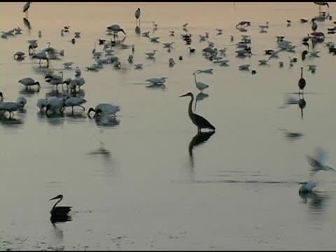 Wetlands at Dawn