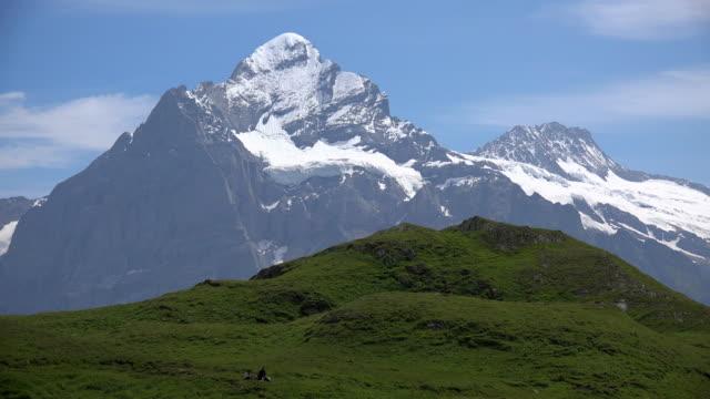 Wetterhorn, Grindelwald, Bernese Alps, Switzerland, Europe