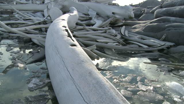 Whale bones (unidentified species). Sub Antarctic Island