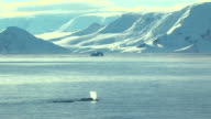 whale spouts in antarctica