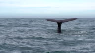SLOW MOTION: Whale Tail