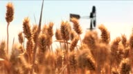 Wheat and windmill