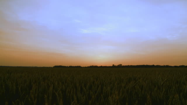 HD: Wheat Field After Sunset