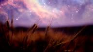 Weizen Feld bei Nacht (Endlos wiederholbar)