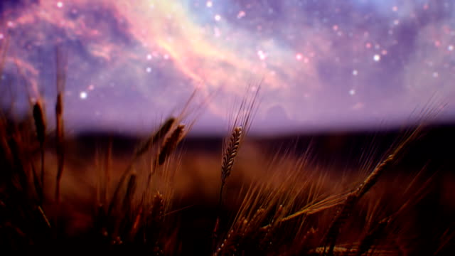 Wheat field at night (loopable)