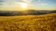 Wheat field in summer at sunset, Pienza, Siena Province, Val d'Orcia, Tuscany, Italy