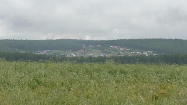 Wheat field. Landscape