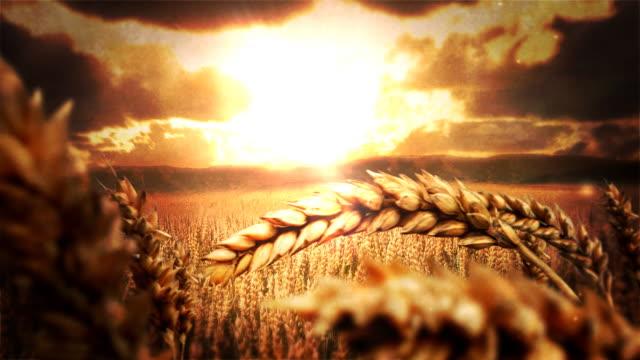 Weizen Field