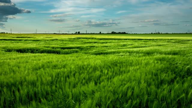 Weizen Feld Wind