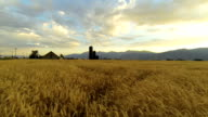 wheat field with silo