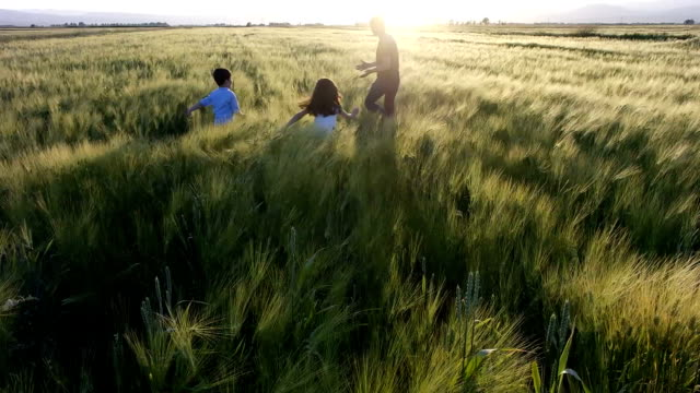 wheat fields and games