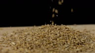 HD SUPER SLOW-MOTION: Cereali di grano