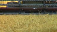 Weizen Ernte