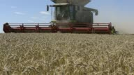 Wheat is harvested with a Claas KGaA Lexion 580 R combine harvester at a farm near Drysdale Australia on Wednesday Feb 15 A farmer walks beside a...