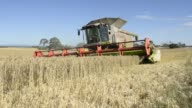Wheat is harvested with a Claas KGaA Lexion 580 R combine harvester at a farm near Drysdale Australia on Wednesday Feb 15 Close up stalks of wheat...