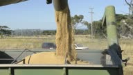 Wheat kernels fall into a hopper from a header machine at a farm near Drysdale Australia on Wednesday Feb 15 Close up a farmer holds harvested wheat...