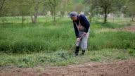 Schubkarren voller Gras