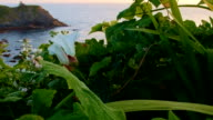 White beach morning glory at ocean Oregon Coast Oregon 21
