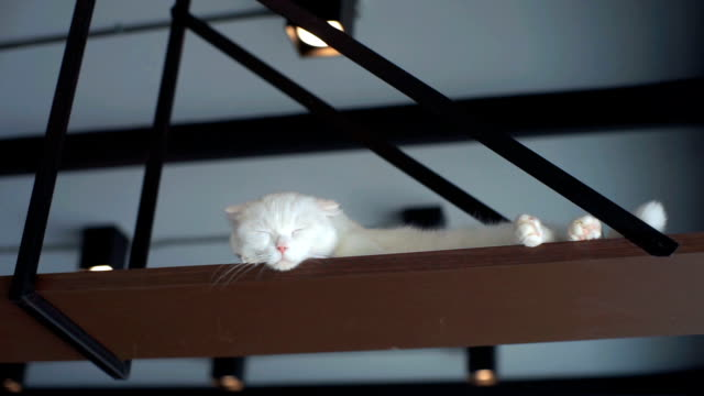 Witte kat slaapt