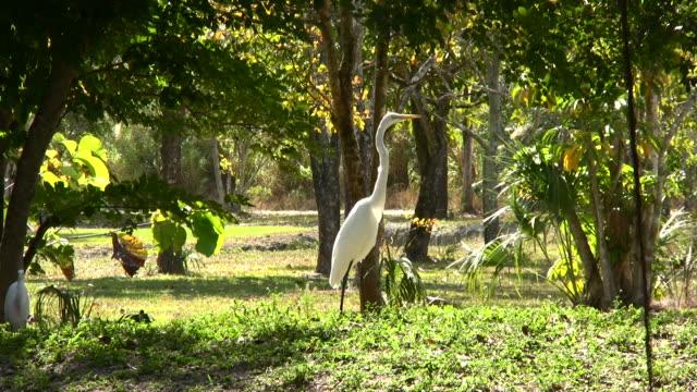 White Crane Habitat
