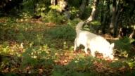 Weißer Hund im Wald