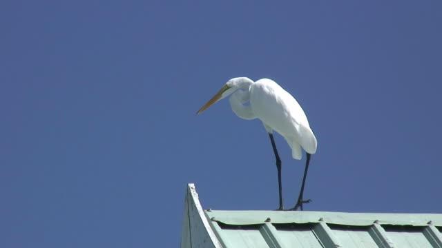 White egret on blue 3 - HD 60i
