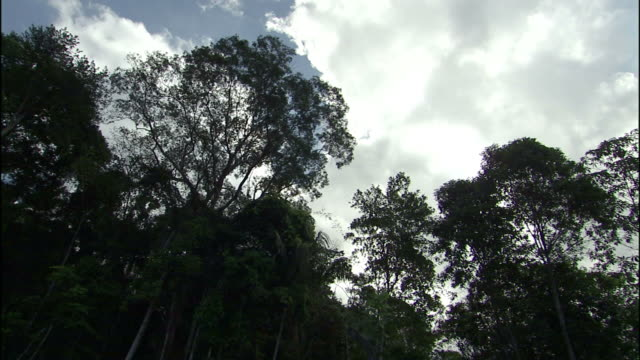 White, fluffy clouds drift over a clear cut area after deforestation in Brazil.