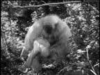 B/W 1945 white gorilla (costume) holding + shaking unconcious blond woman (Maris Wrixon) in jungle
