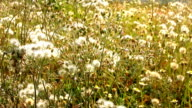Weiße Gras Blume im Garten