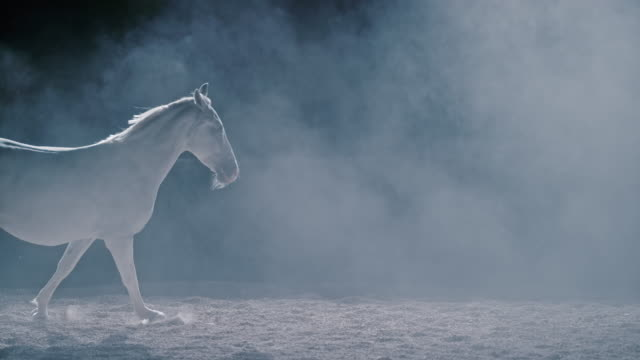 SLO MO LD White horse galloping in a foggy night