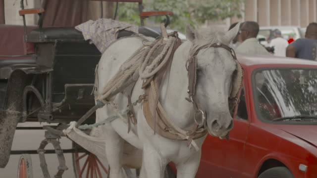 White horse harnessed to carriage on busy street