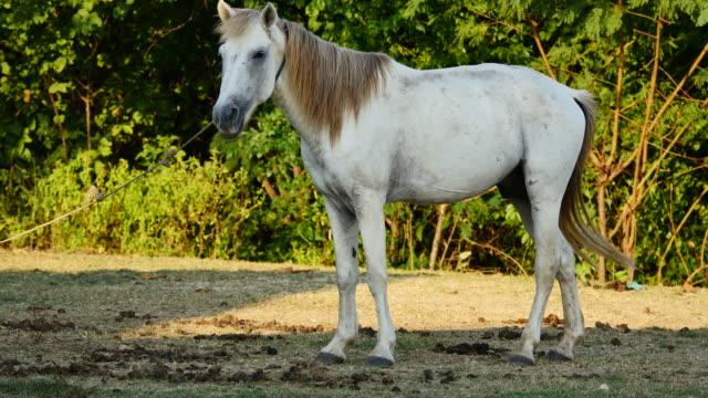 Weißes Pferd stehend in allein angebunden.