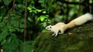 White Squirrel Eating Food