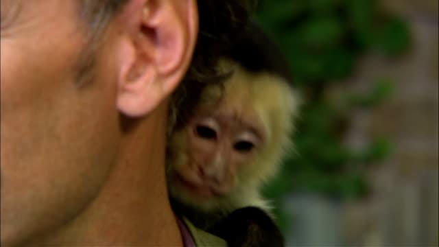 Whiteheaded Capuchin monkey on shoulder of unidentifiable male White Faced Capuchin wildlife