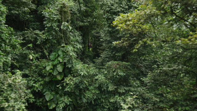 Wide high angle tracking shot of zipline in rain forest trees / Quepos, Puntarenas, Costa Rica