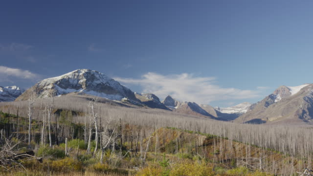 Wide panning shot of barren trees in mountain landscape / Glacier National Park, Montana, United States