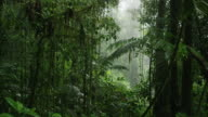 Wide panning shot of dense rain forest / Arenal, Costa Rica